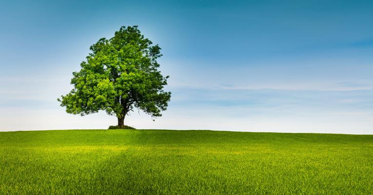 Selbstheilungskräfte mit der Kraft der Bäume stärken.